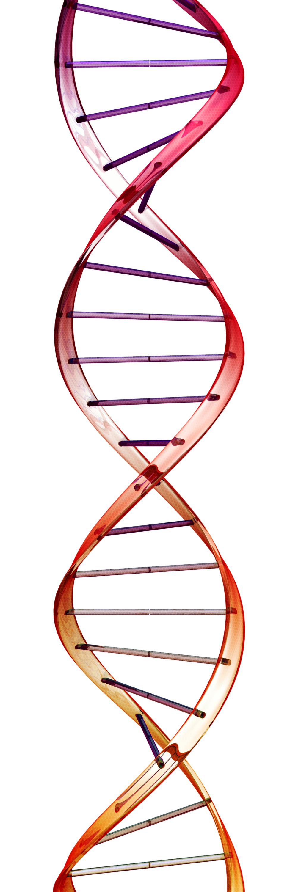 Double Helix Science And Belief