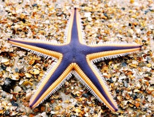 Hurul Ain, www.freeimages.com