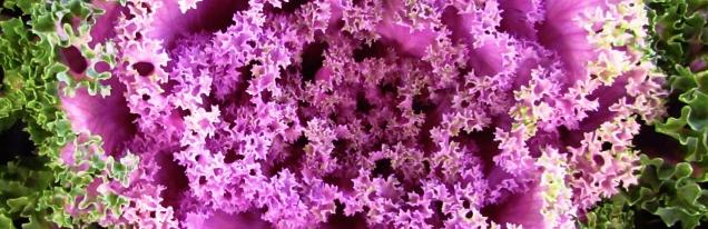 Kale © Caltiva Creatividad, freeimages.com