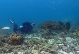 Large Grouper