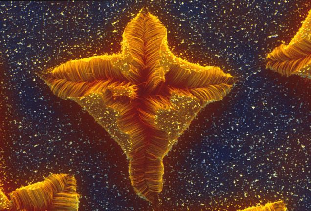 Nanostar, scienceimage.csiro.au, Creative Commons Attribution-Share Alike 3.0 Unported license
