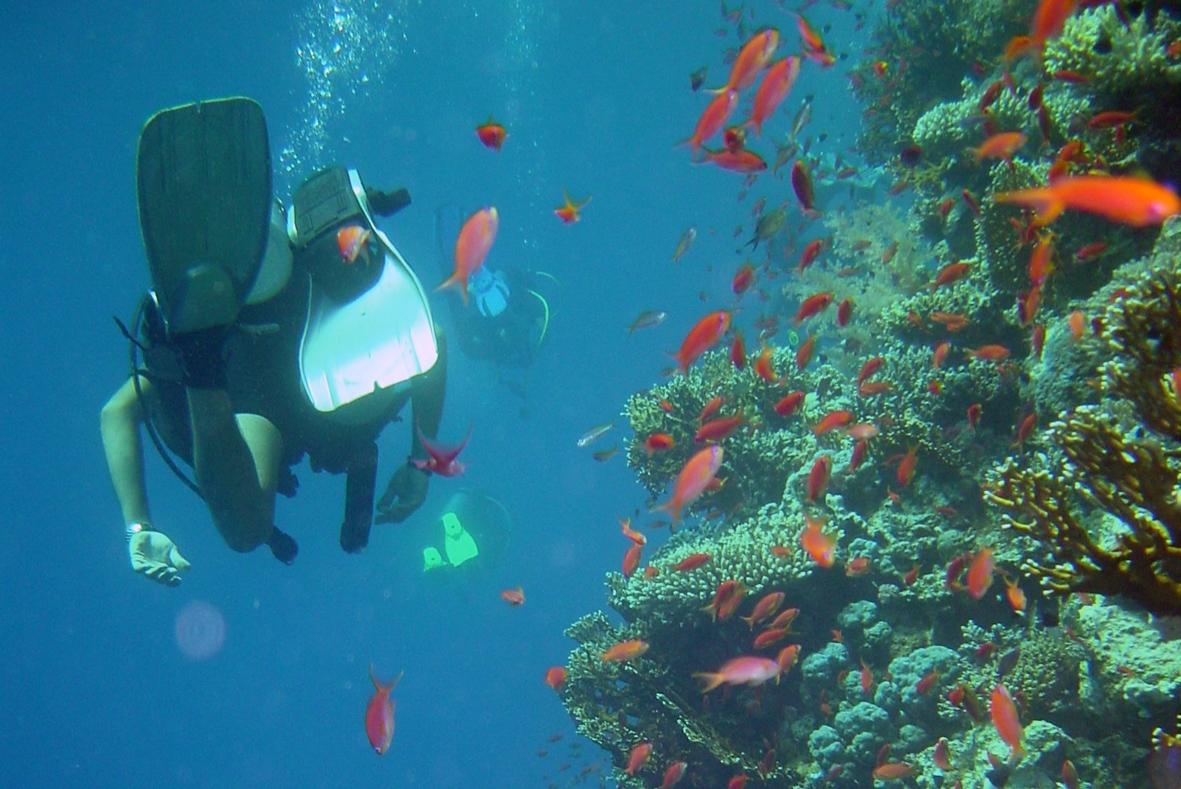 in the eye of the barracuda beauty in the ocean u2013 science and belief