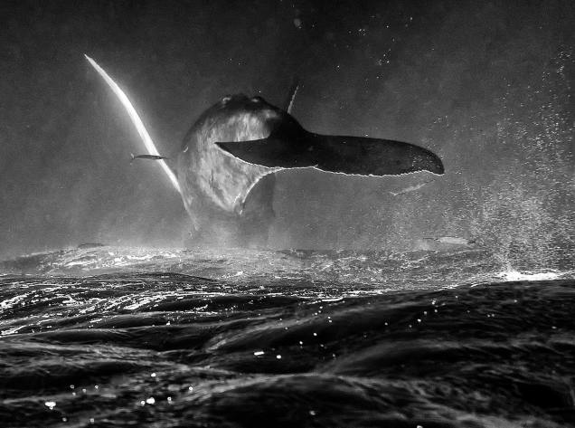 If Whales Could Fly by Christopher Michel – Flickr – License: Creative Commons 2.0