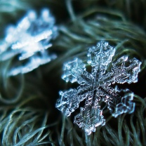 Snowflakes by Alexey Kljatov – Flickr. License: CC2.0