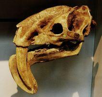 Marsupial mammal By Alexei Kouprianov (Own work) [GFDL or CC BY 3.0], via Wikimedia Commons