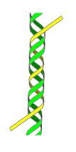 TsDNA