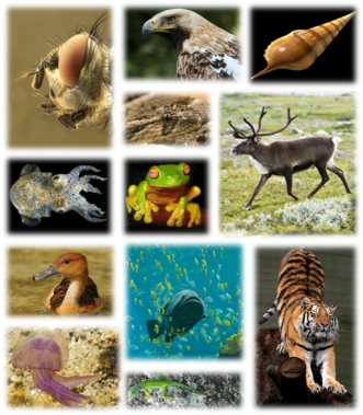 Kingdom_of_animals