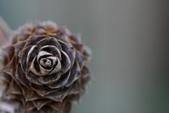 Fibonacci by Jessica Lucia. Flickr. (CC BY-NC-ND 2.0)