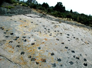 Dinosaur tracks by James St. John. Flickr. (CC BY 2.0)
