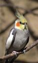 Bird by Jeffrey Rolinc. Flickr. (CC BY-NC-ND 2.0)