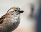 bird by Tammy McGary. Flickr. (CC BY 2.0)
