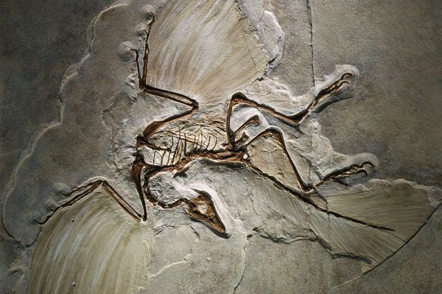 Archaeopteryx_fossil