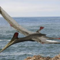 Pterodactylus By Nobu Tamura (http://spinops.blogspot.com) (Own work) [GFDL or CC BY 3.0], via Wikimedia Commons