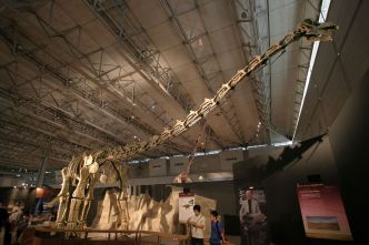 Titanosaur in Japan By Kabacchi (Titanosaur - 01  Uploaded by FunkMonk) [CC BY 2.0], via Wikimedia Commons