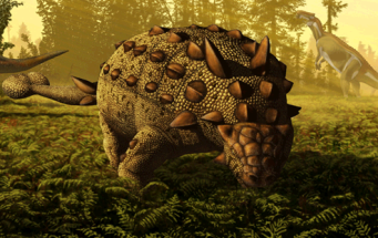 Scolosaurus feeding By Jullius Cstonyi (Other image on commons) [CC BY 3.0], via Wikimedia Commons