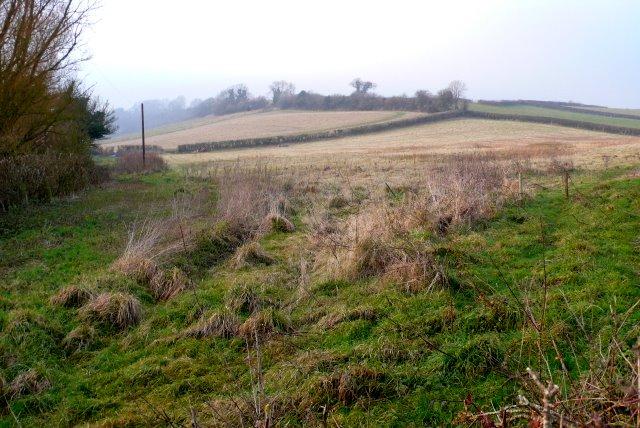 countryside_near_alton_pancras_-_geograph-org-uk_-_1101543