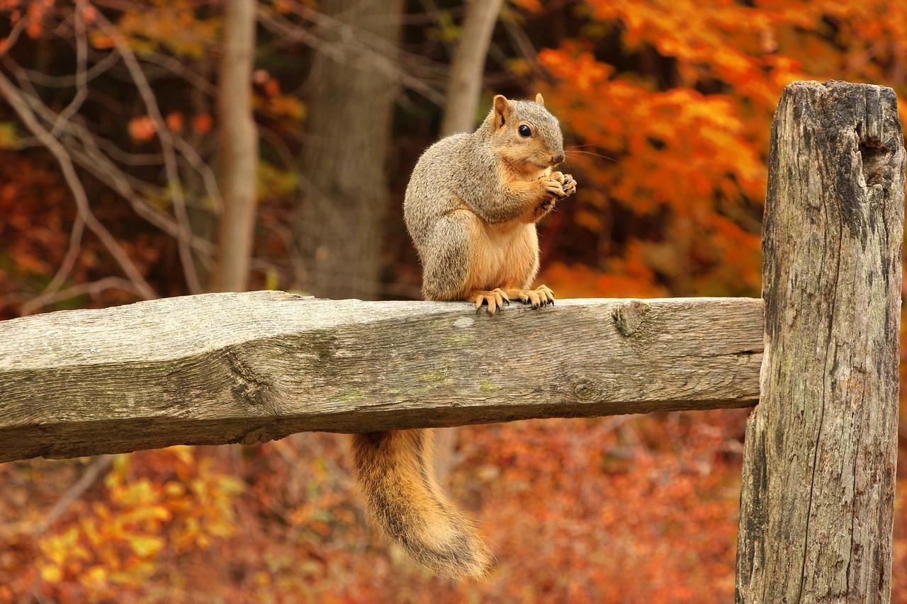 squirrel-316426_1280