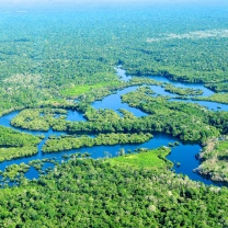 Amazon Rainforest By CIFOR. Flickr. (CC BY-NC-ND 2.0)