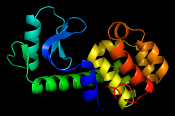 Structure of the antibacterial protein lysozyme (from PDB structure 1lyd)