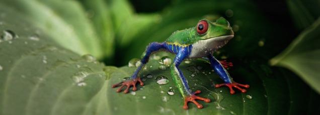 frog-3428988_1920 pixabay crop