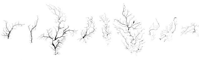 21 trees copy 2