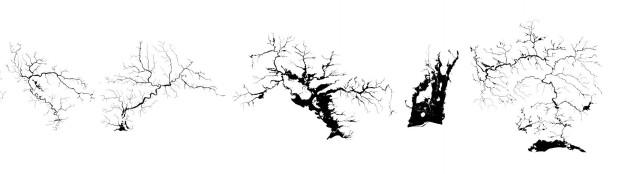 21 trees copy 3