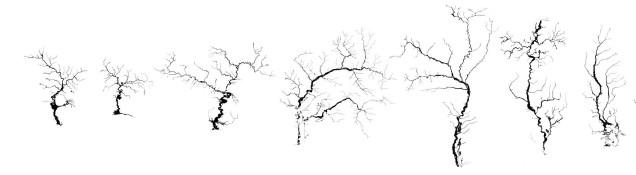 21 trees copy